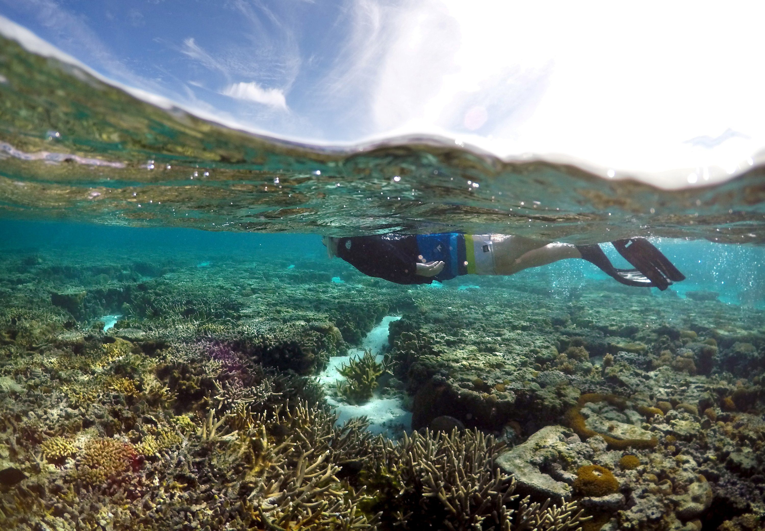 A tourist snorkels above coral in the lagoon located on Lady Elliot Island on the Great Barrier Reef, Australia, June 9, 2015. (REUTERS Photo)