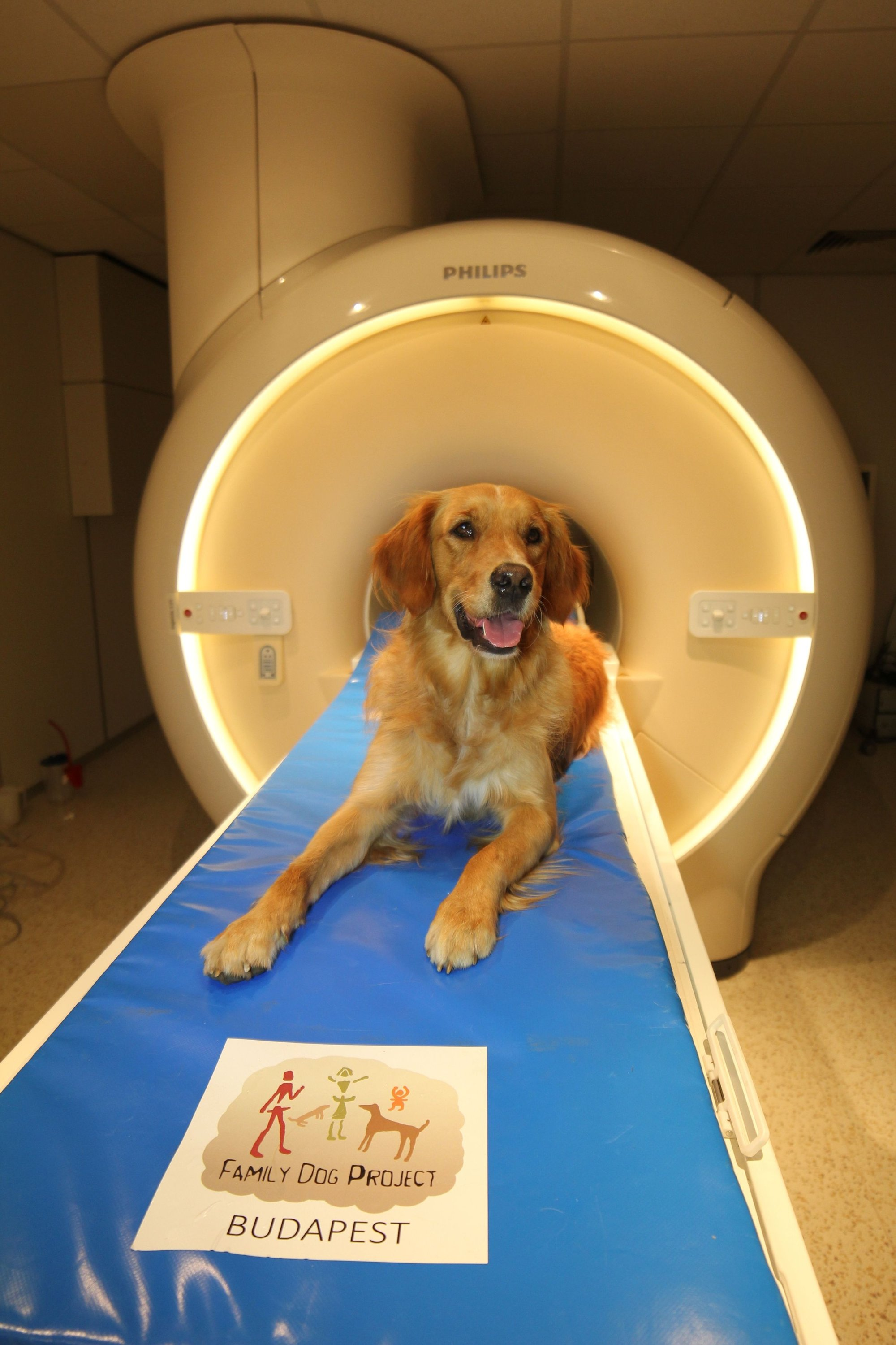 A local dog waits for an examination at an MR scanner at Eotvos Lorand University in Budapest, Hungary, Aug. 24, 2016. (AFP Photo)