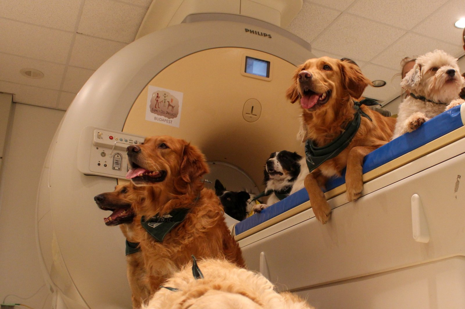 Dogs wait for an examination at an MR scanner at Eotvos Lorand University in Budapest, Hungary, Feb/ 11, 2016. (AFP Photo)