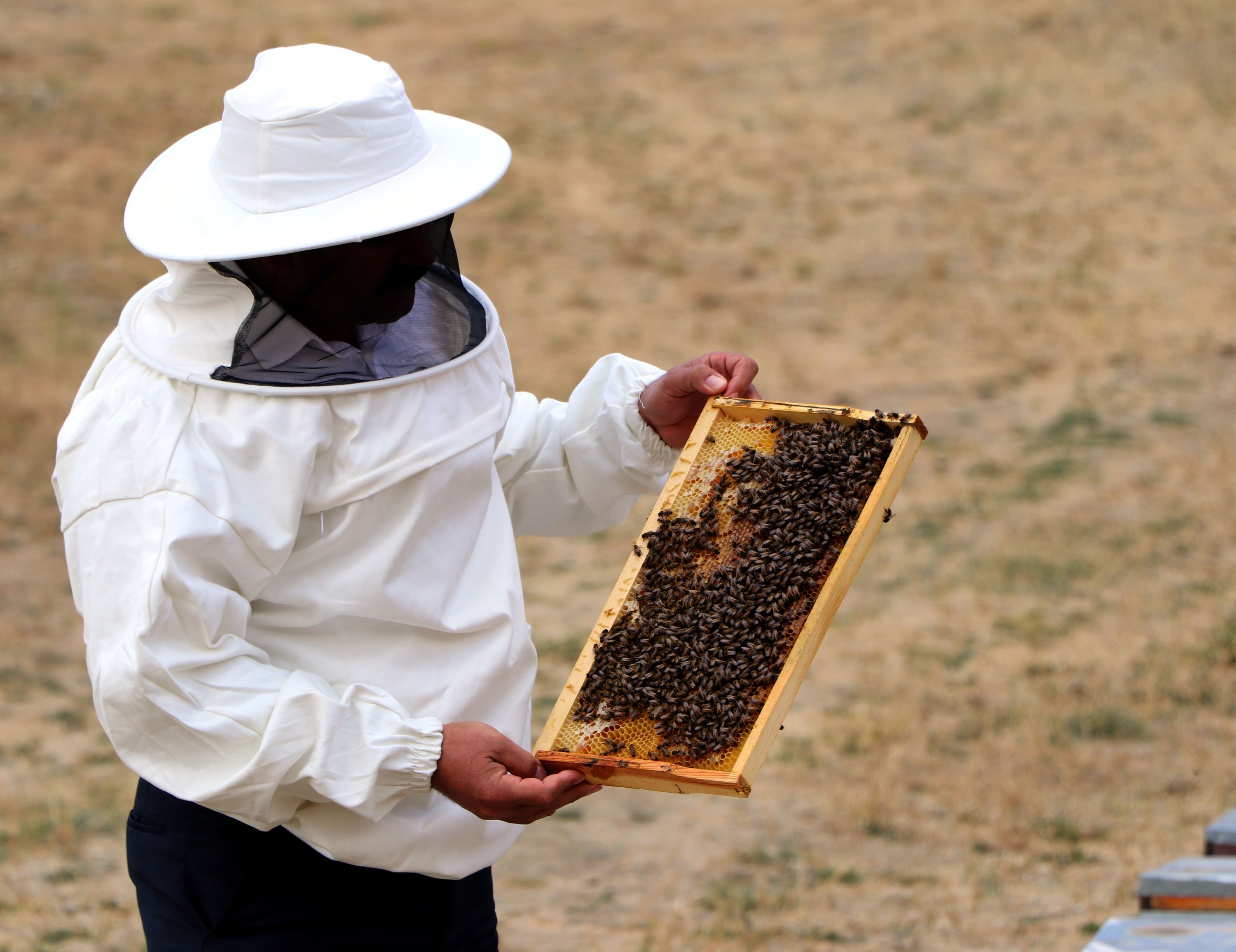 Beekeepers blame global warming for death of millions of bees in southern Turkey
