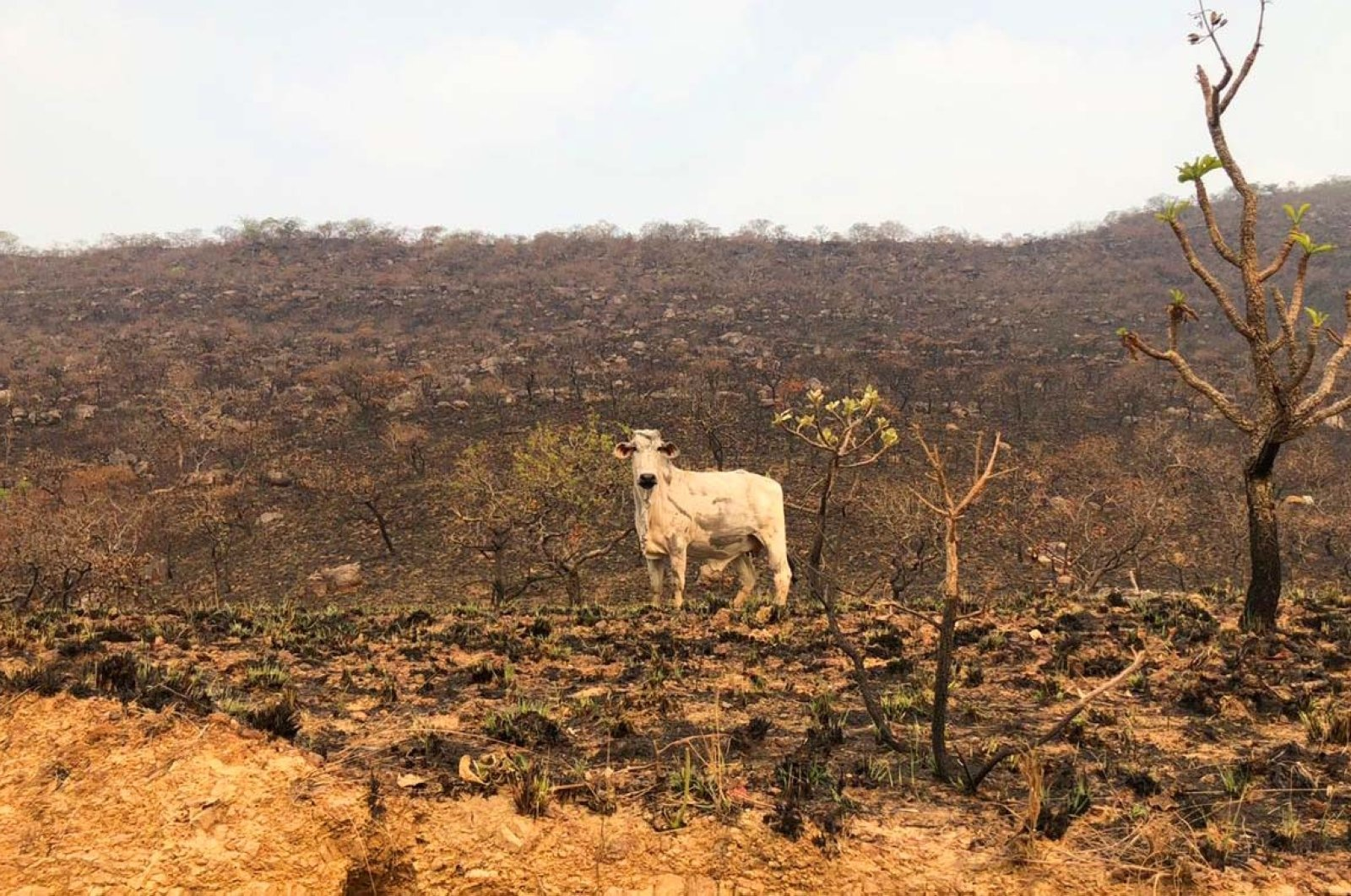 Photo shows the damage left by the forest fires that affect the Pantanal region in Mato Grosso, Brazil, Sept. 17, 2020. (REUTERS Photo)