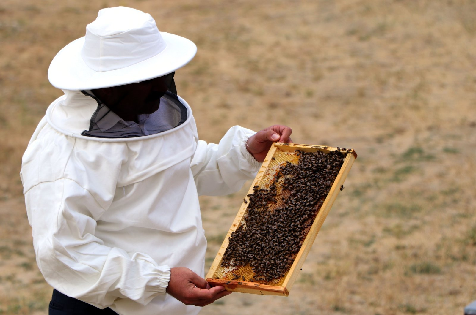 A beekeeper holds a honeycomb in a frame in eastern Van province, Turkey, Oct. 10, 2020. (DHA Photo)