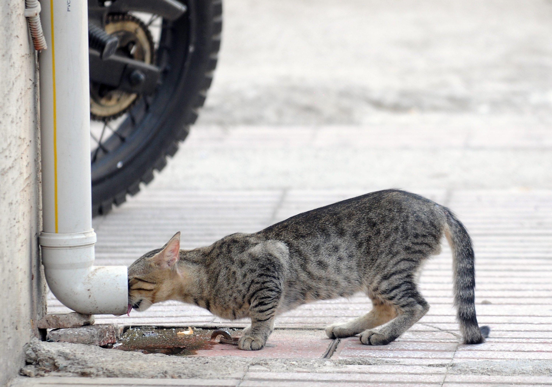 Turkey's Antalya to build Stray Animals Care House