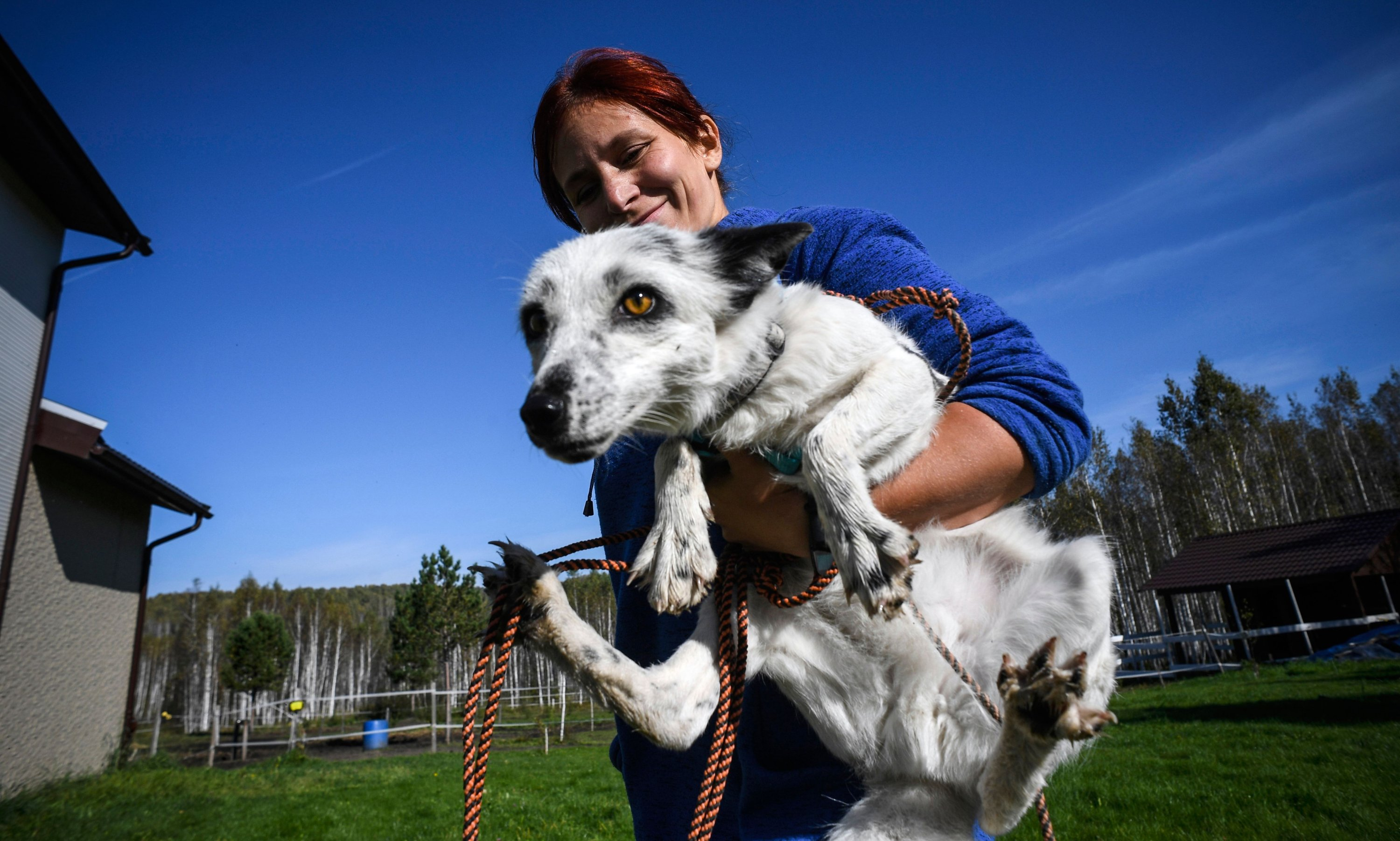 Tatyana Abramova, 33, carries her pet fox Plombir at her countryside house outside the Siberian city of Novosibirsk on Sept. 12, 2020.  (AFP Photo)