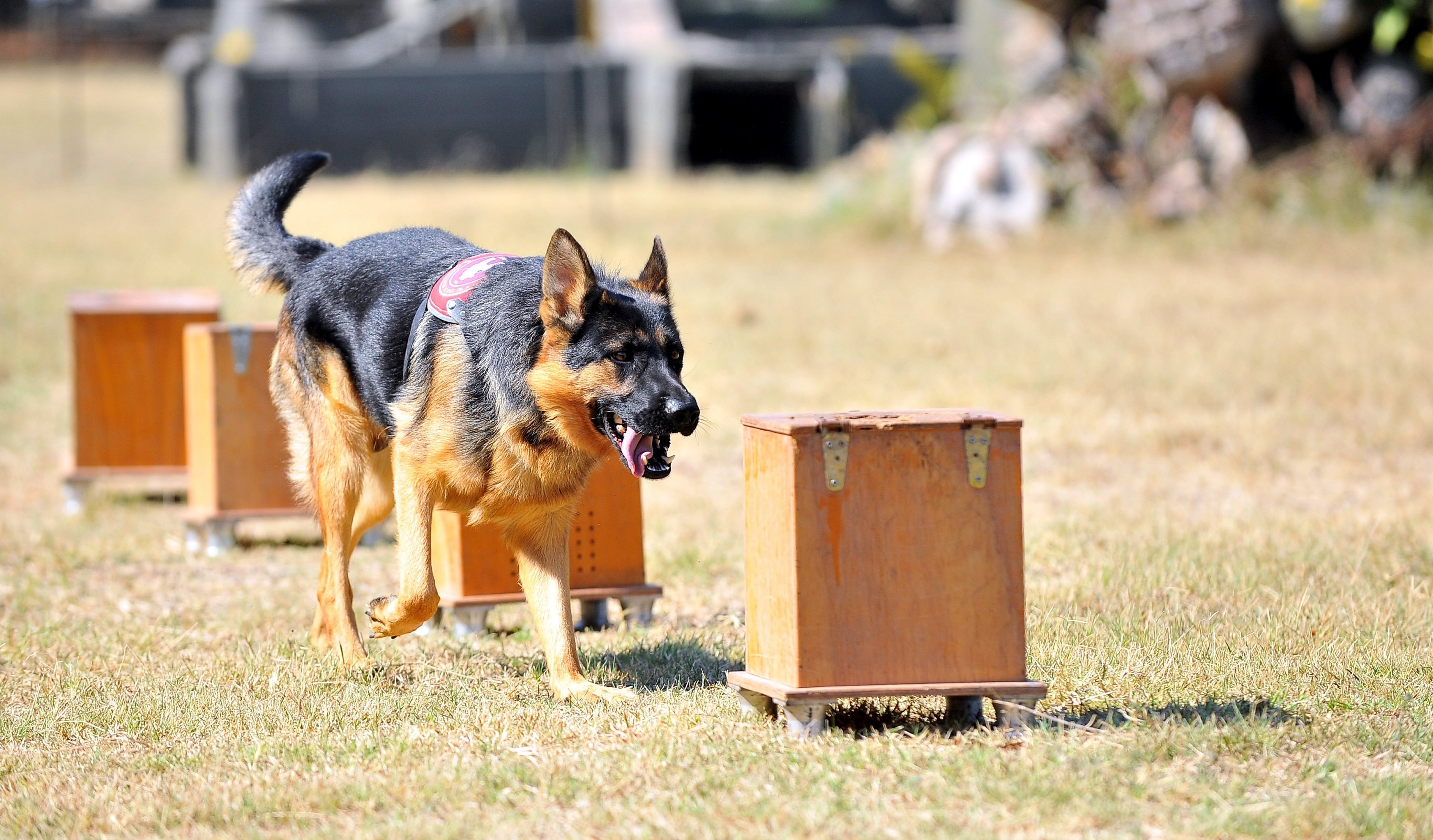 Turkish Armed Forces dogs get ruff training for tough missions