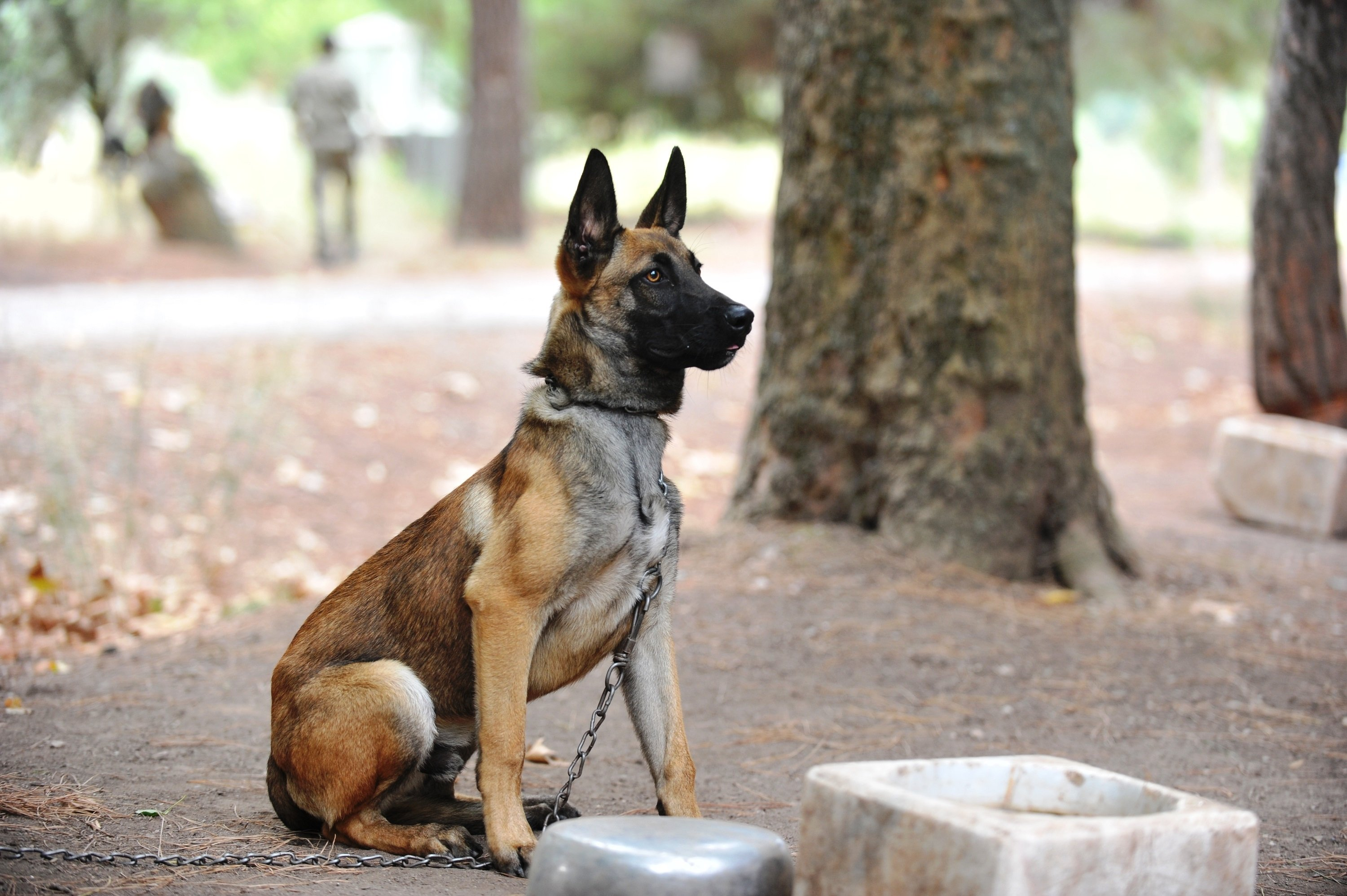 Dogs undergo strict training during their time at training center. (DHA Photo)