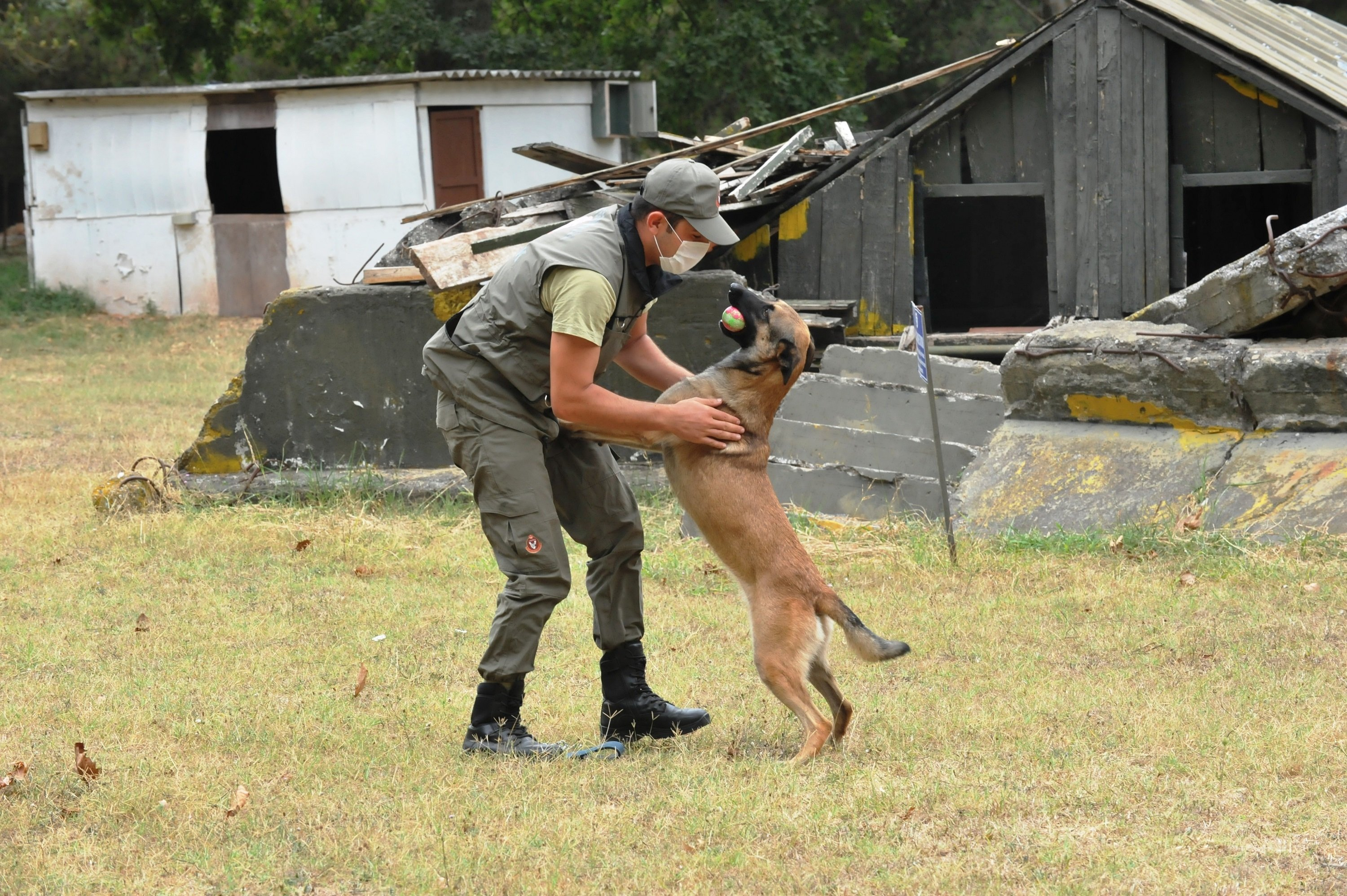 Each dog is trained for different missions, from mine detection to reconnaissance. (DHA Photo)
