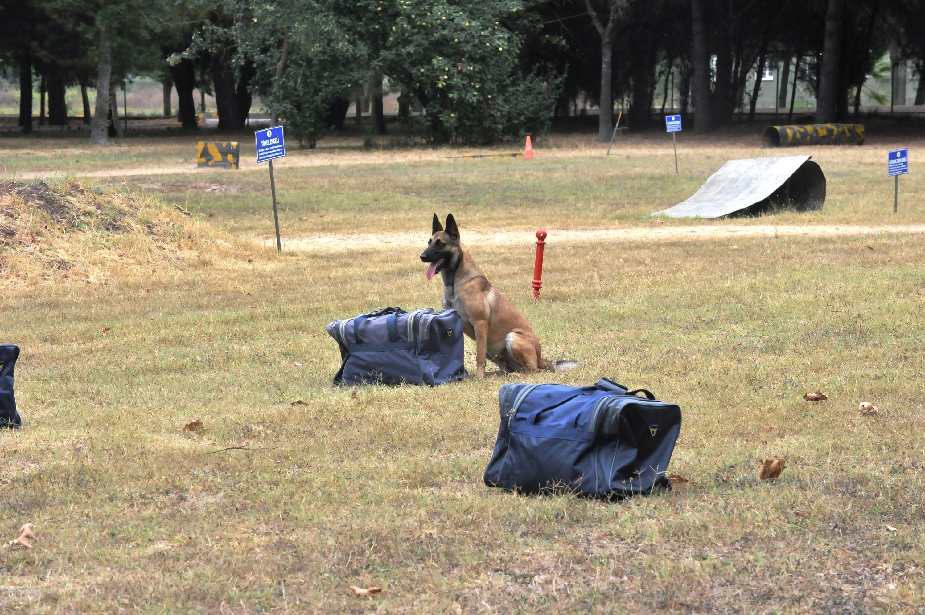 A dog in training course at the center. (DHA Photo)