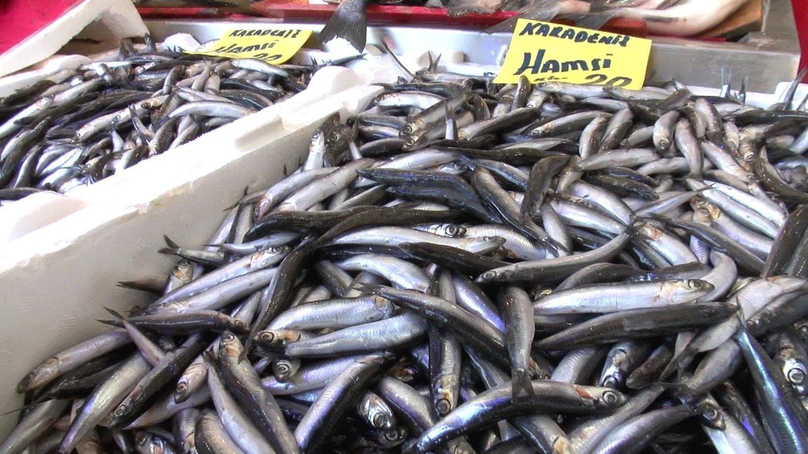 Black Sea 'neighbors' deprive Turkey's fishermen of hamsi