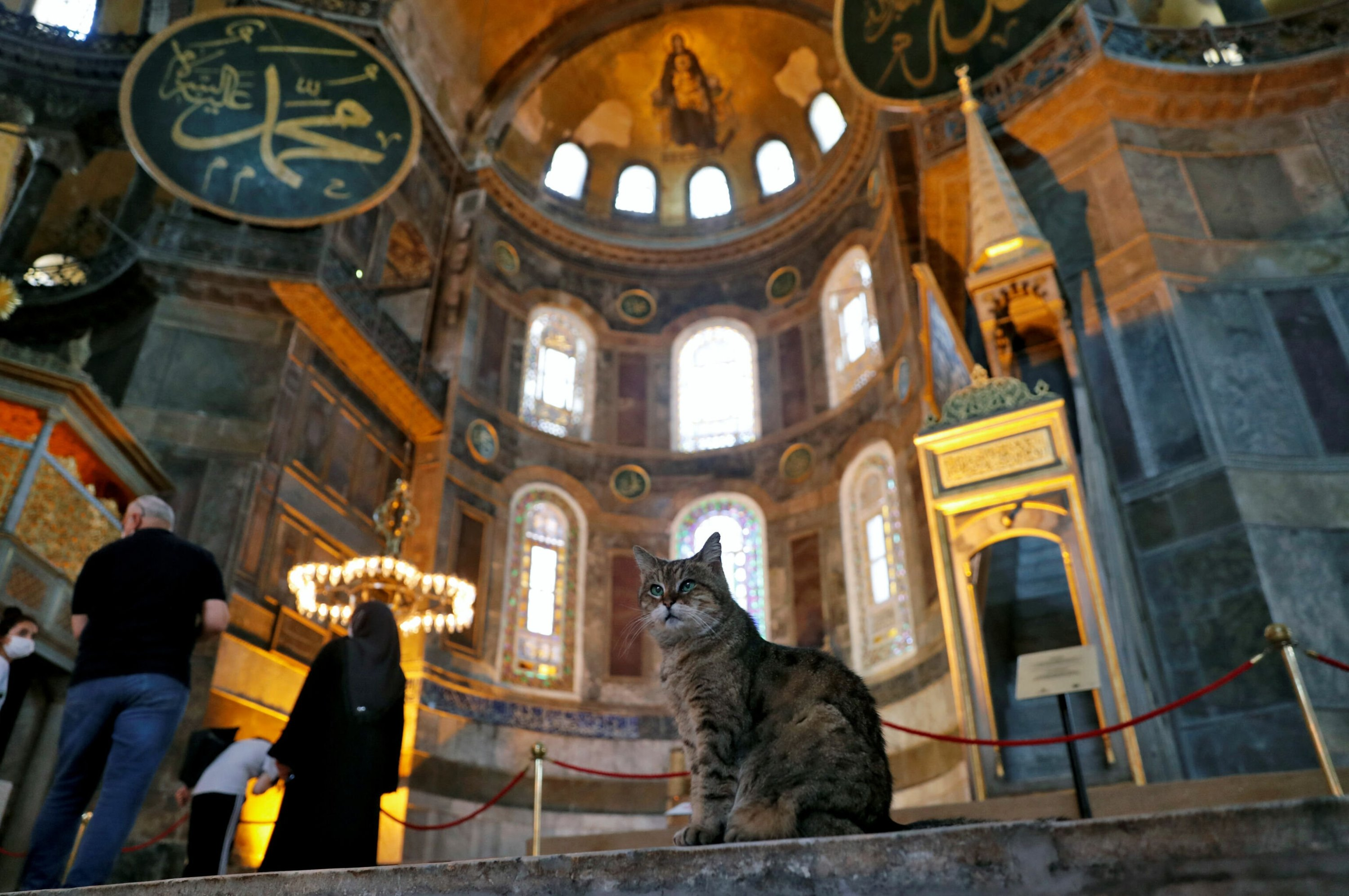 New app to make life easier for Istanbul's stray animals