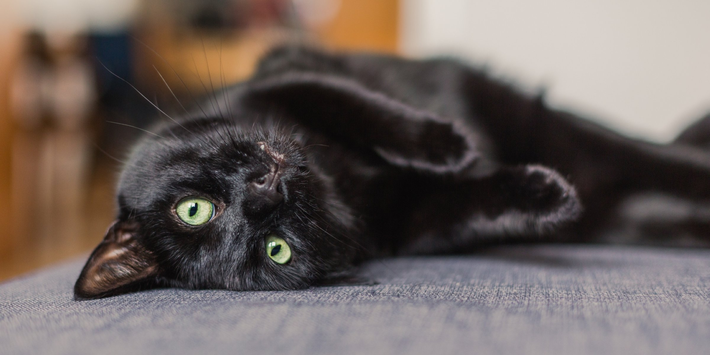 Names For Female Black Cats