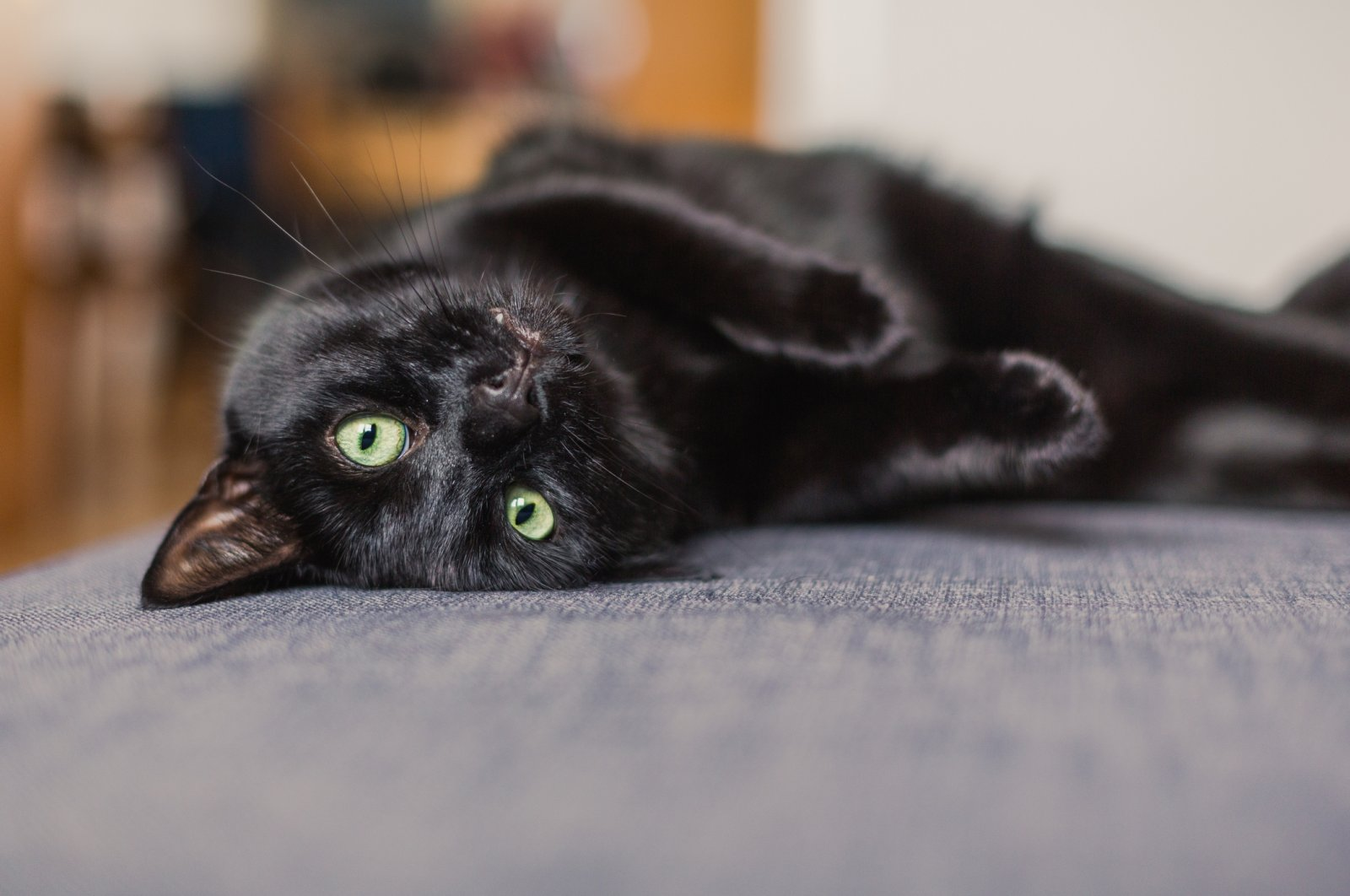 Black cats weren't always considered unlucky creatures; ancient people cherished and even worshipped them. (iStock Photo)