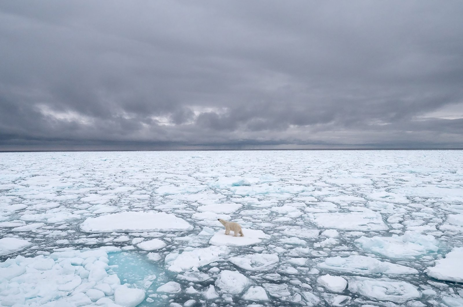 This file handout photo taken in June 2018 and made available on July 17, 2020 by Polar Bears International shows a polar bear in Svalbard, Norway. (AFP Photo)