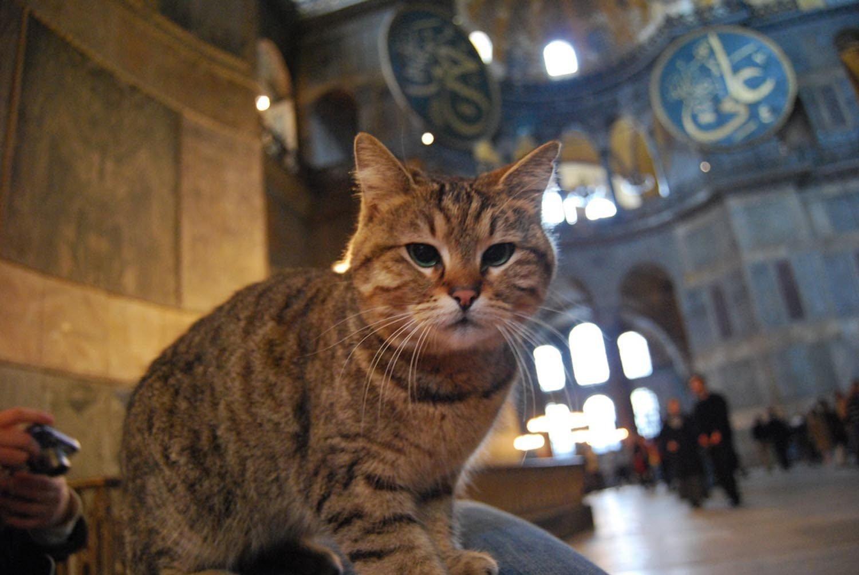 Gli at the Hagia Sophia Grand Mosque in Istanbul, Turkey. (File Photo via Günaydın)