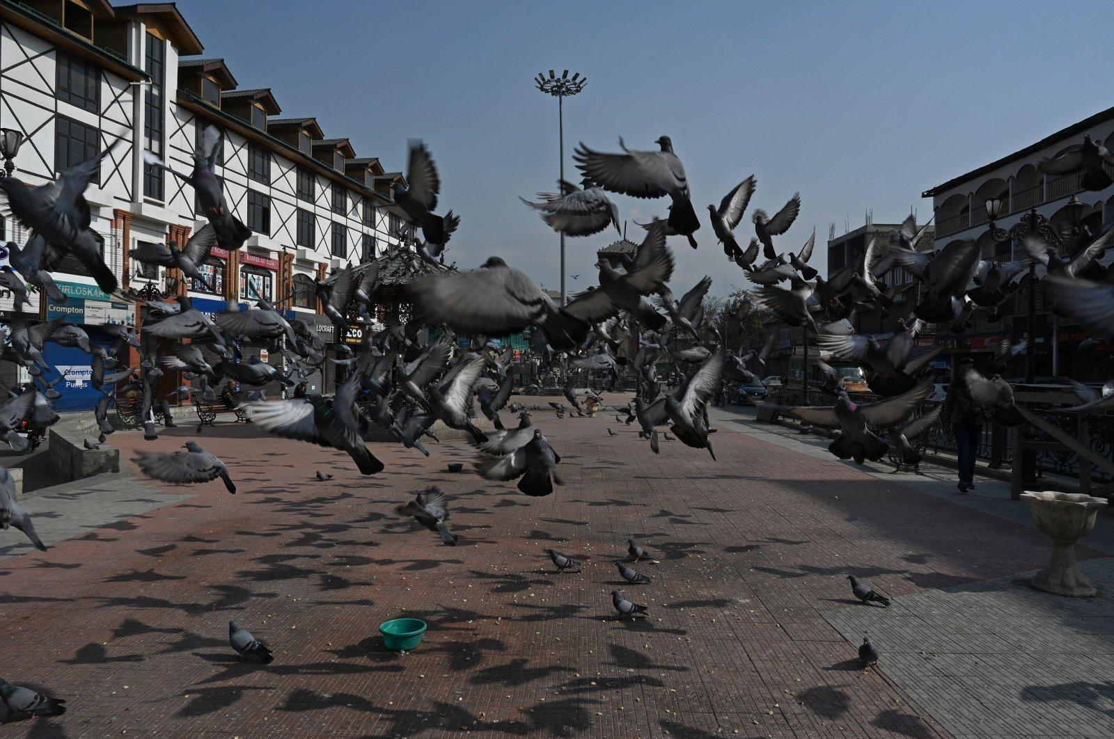 Pigeons take flight in a square in Srinagar, Kashmir, Oct. 31, 2020. (AFP Photo)