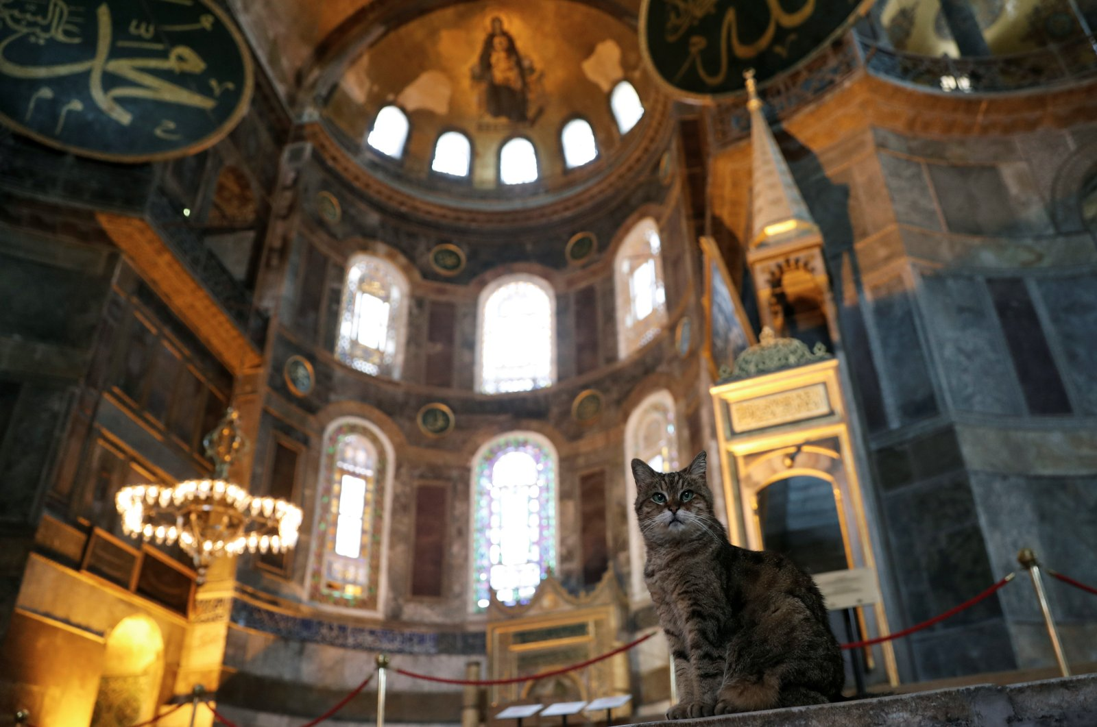 Gli the cat of Hagia Sophia, a UNESCO World Heritage Site, is pictured at Hagia Sophia in Istanbul, Turkey July 2, 2020.  (Reuters Photo)