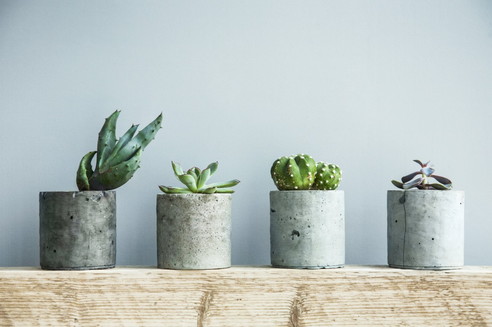 Succulents are the ideal houseplant, and if you don't commit these sins, they'll likely live for a long time. (Shutterstock Photo)