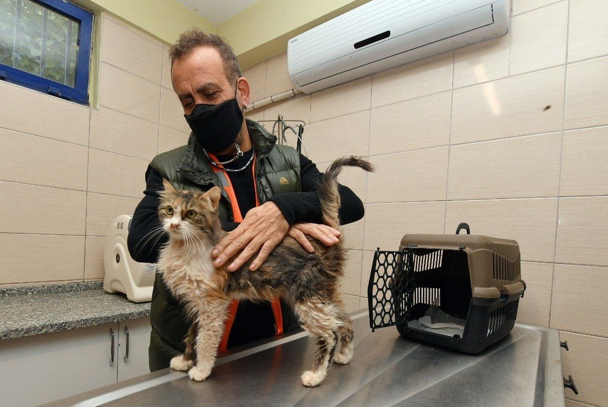 Haluk Levent poses with the cat, in Izmir, western Turkey, Nov. 12, 2020. (AA Photo)