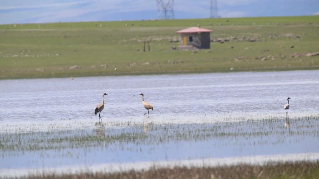 Despite drying up last year, Kuyucuk Lake in Kars' Arpaçay district has been revived and now hosts 110 bird species as of November 2020, in eastern Turkey. (AA Photo)