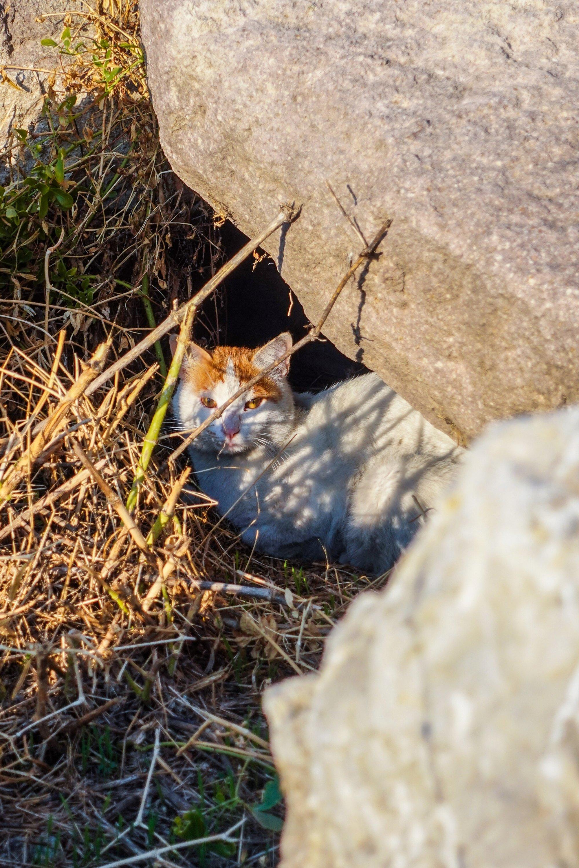 One of the many feline residents of the Roman baths. (Photo by Argun Konuk)