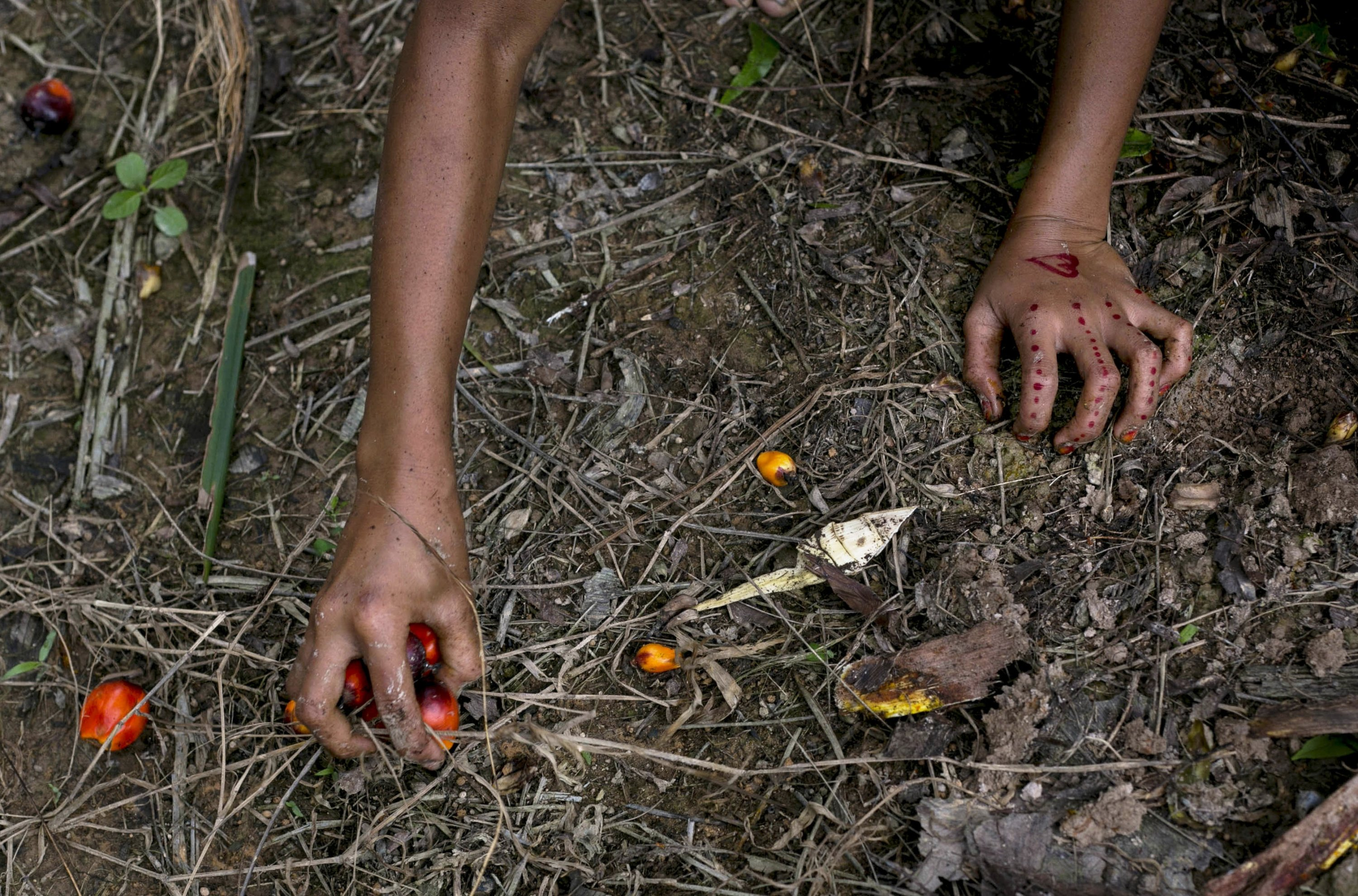 A child collects palm kernels from the ground at a palm oil plantation in Sumatra, Indonesia, Monday, Nov. 13, 2017. Children often work to help parents to reach their targets set by the vast plantations across Indonesia and neighboring Malaysia. (AP Photo)