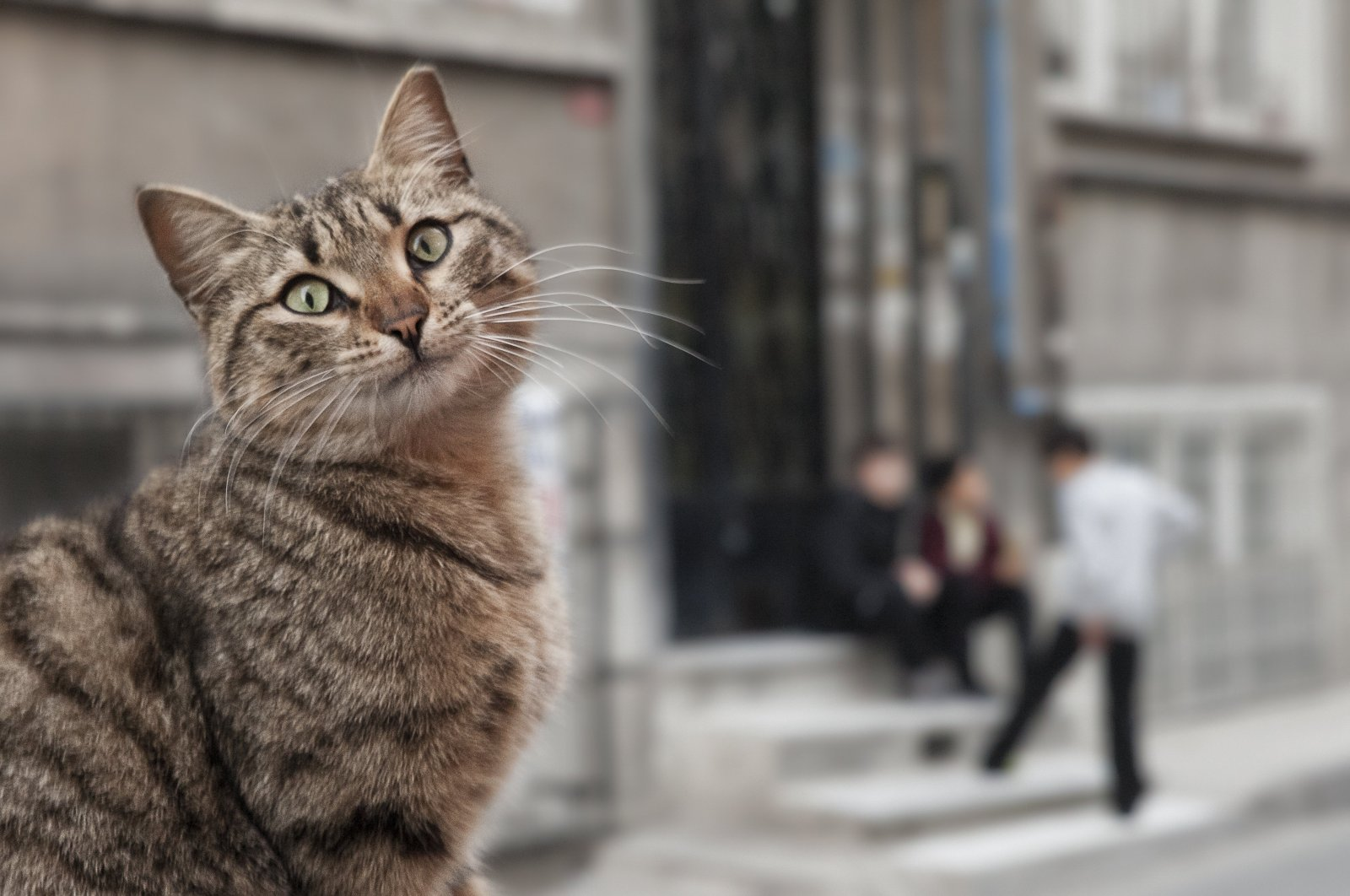 A cat poses for the camera on the streets of Istanbul, with three children in the background.