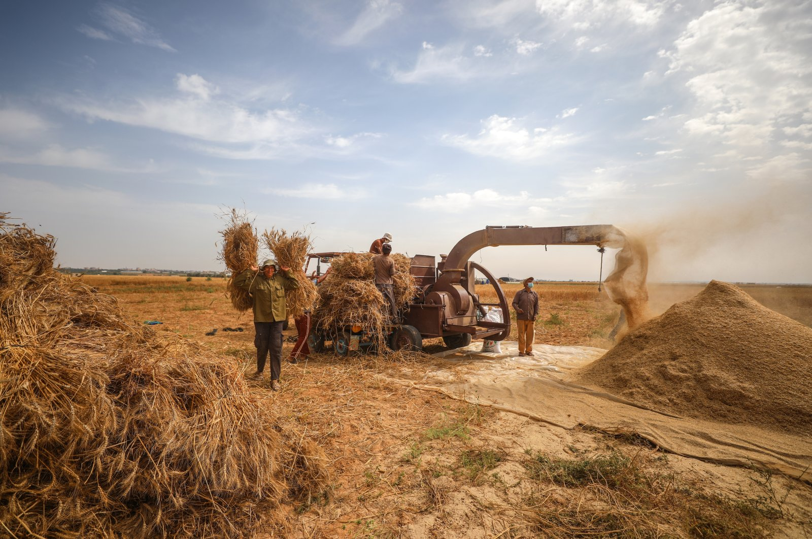 Palestinian farmers harvest seasonal wheat in southern Han Yunus province in the blockaded Gazza Strip, Palestine, May 15, 2020. (AA Photo)