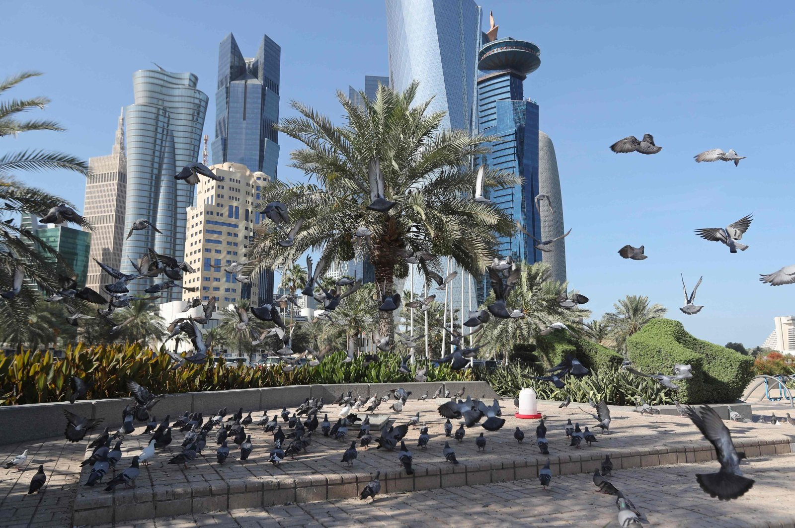 A general view taken on June 5, 2017, shows pigeons flying above the corniche in Doha, Qatar. (AFP Photo)
