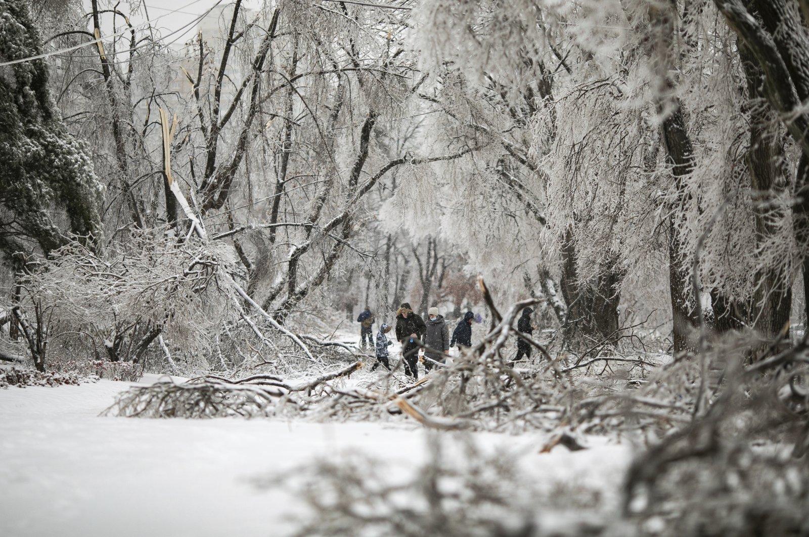 People walk between fallen tree branches after an ice storm in Vladivostok, Russia, Nov. 20, 2020. (AP Photo)