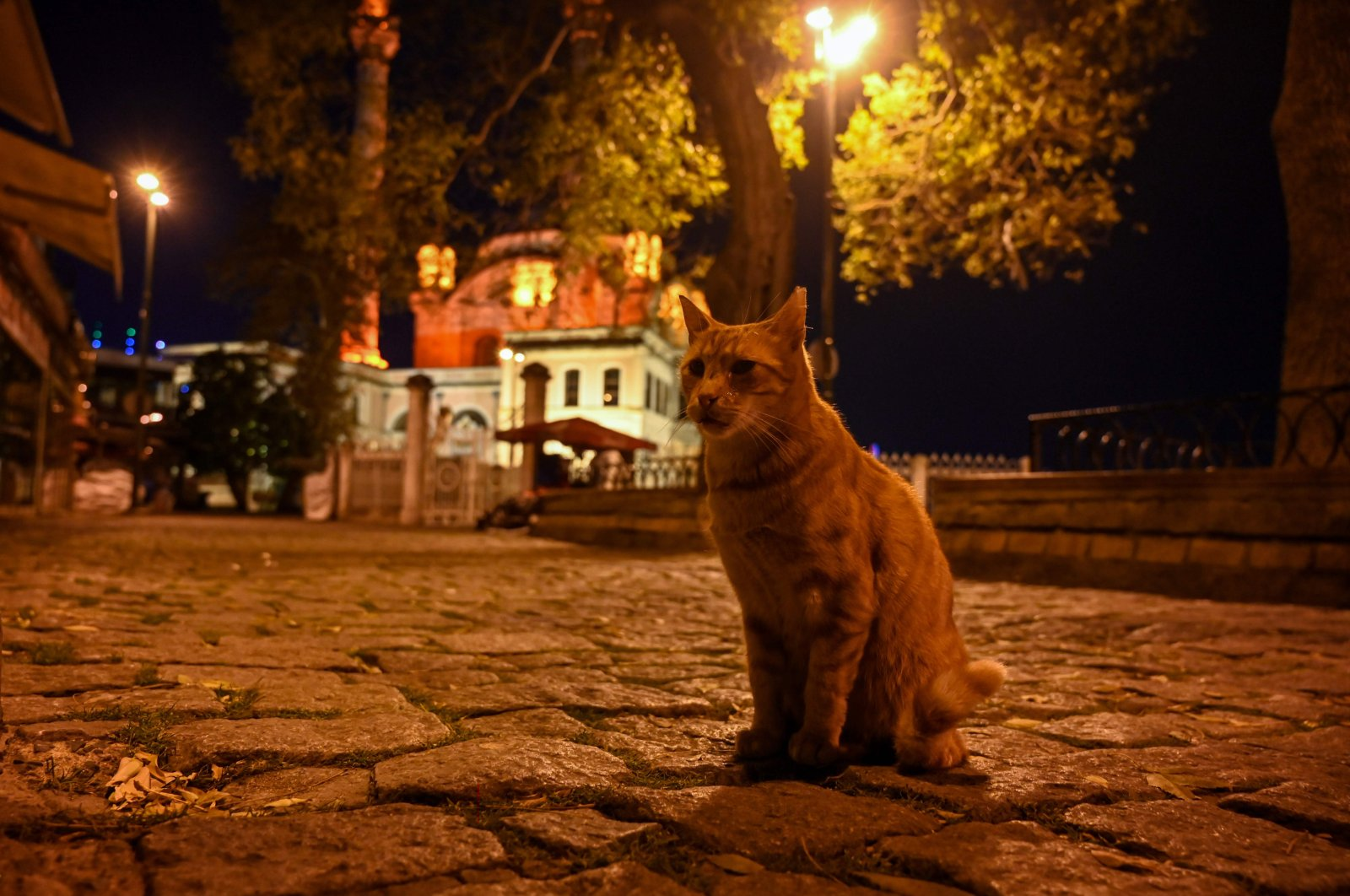 A stray cat sits on the deserted Ortaköy Square during the coronavirus weekend curfew, in Istanbul, Turkey, Nov. 28, 2020. (AFP Photo)