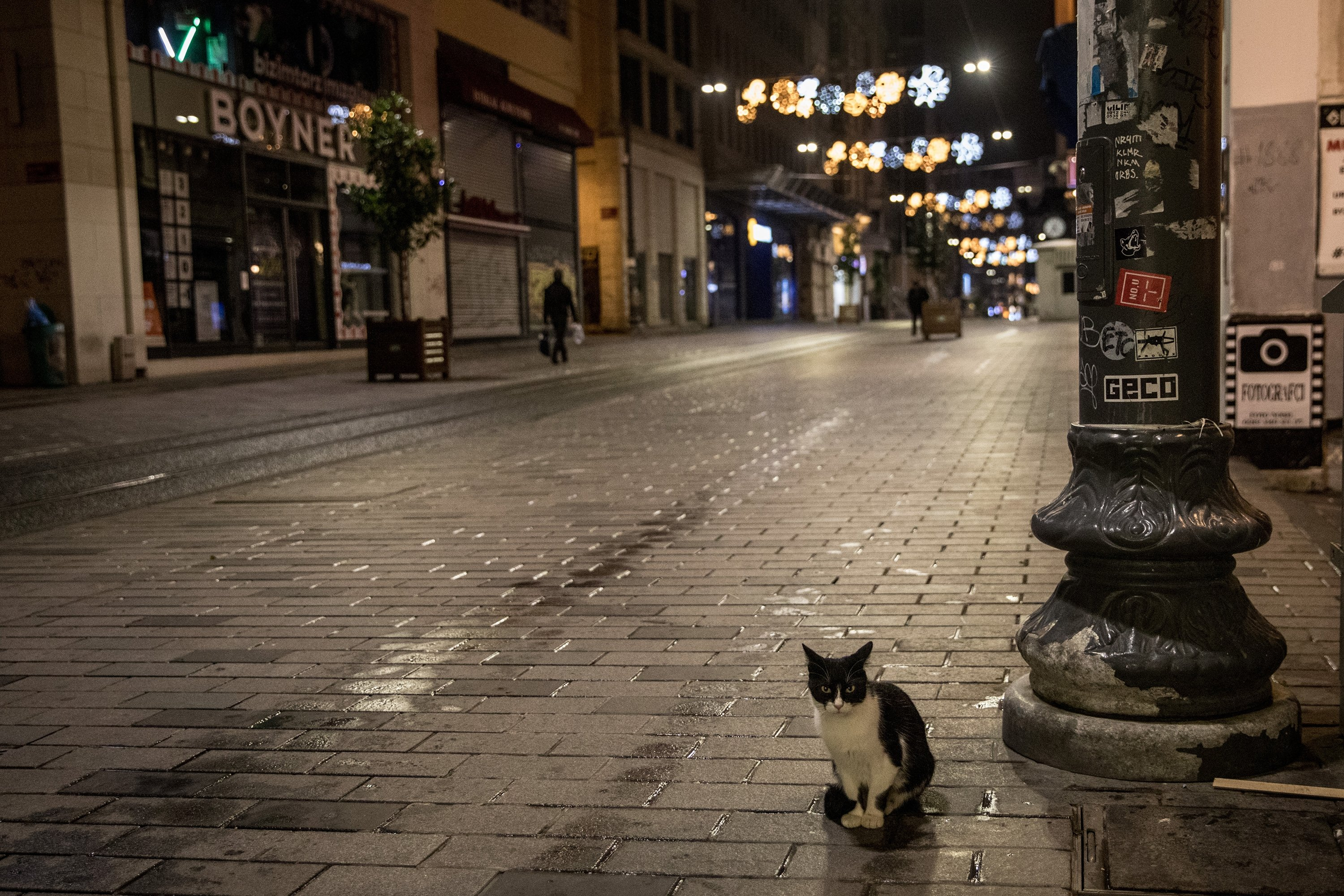 A cat sits in a near-empty street as a new weekday curfew comes into effect in Istanbul, Dec. 1, 2020.  (Photo by Getty Images)