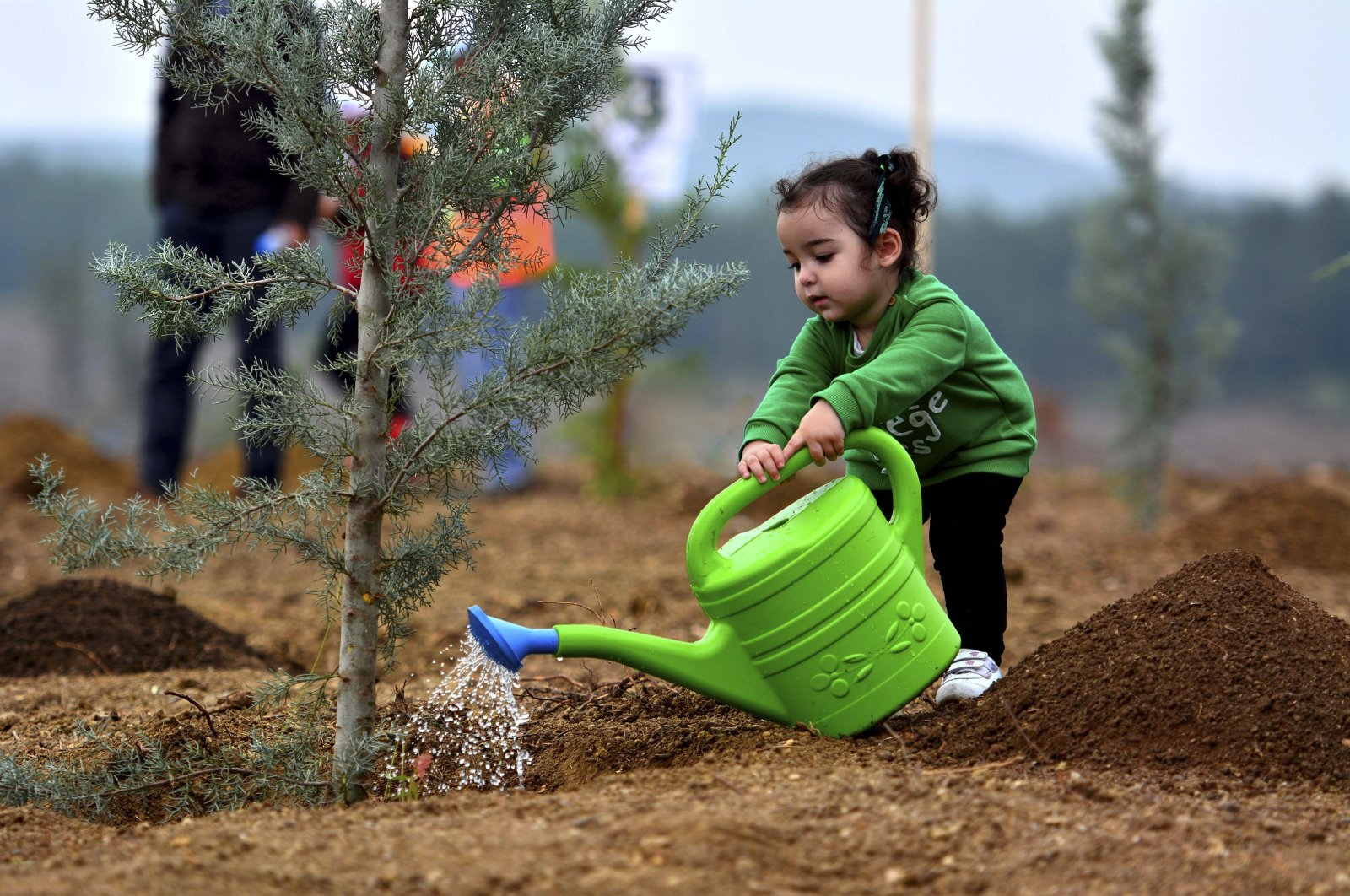 """A child waters a sapling dibbled as part of the government's""""Breath for the Future"""" campaign to plant over 13 million trees across the country, Istanbul, Turkey, Nov. 11, 2020. (AA Photo)"""