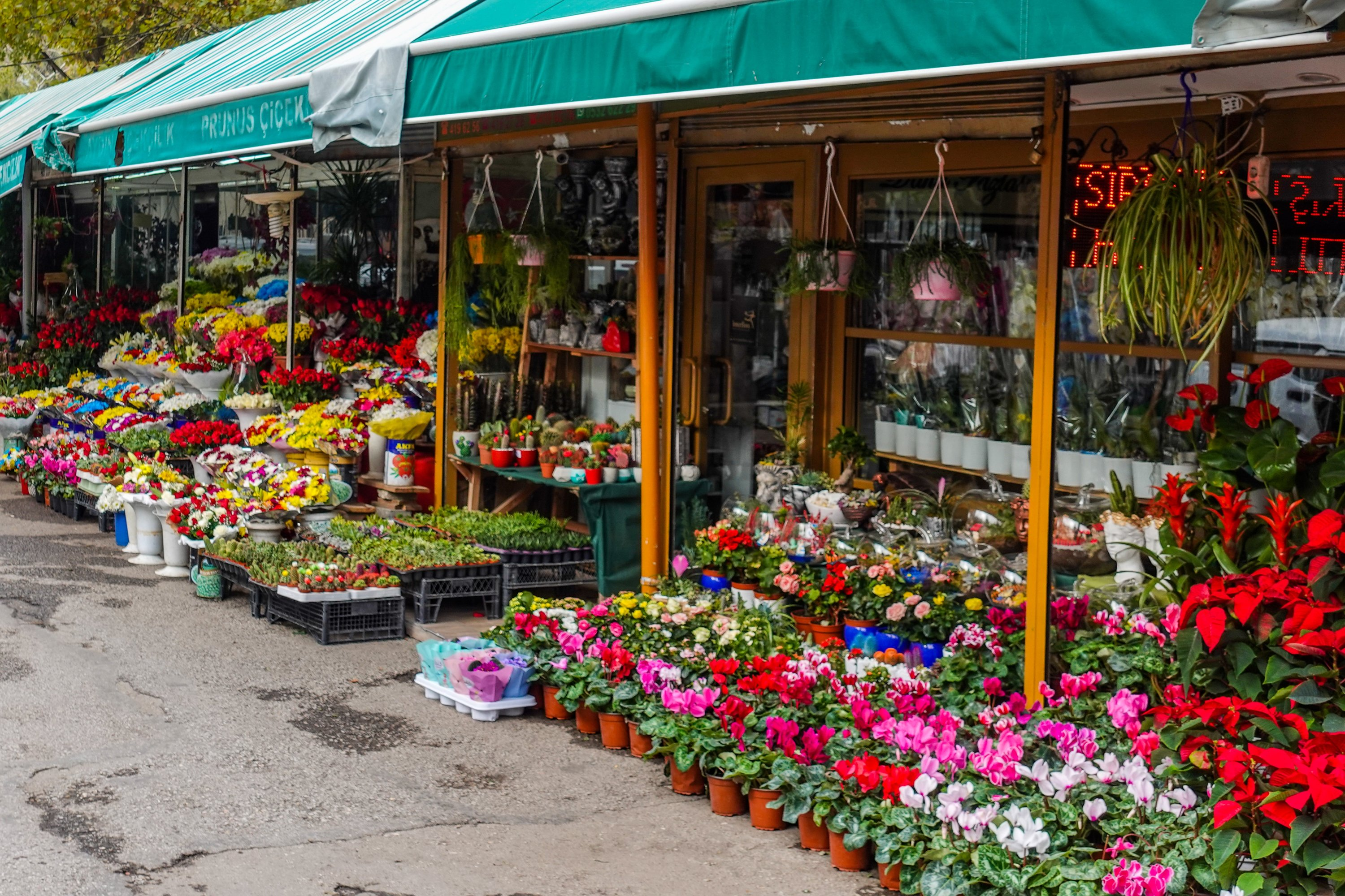 Flower shops near Güvenpark. (Photo by Argun Konuk)