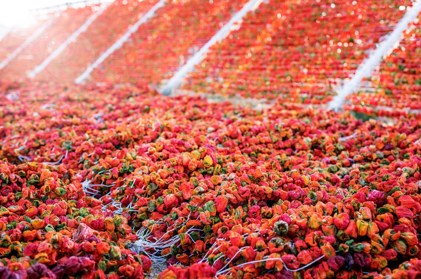 Isot is Turkish dried hot chili flakes made from peppers (pictured) native to Şanlıurfa. (Shutterstock Photo)