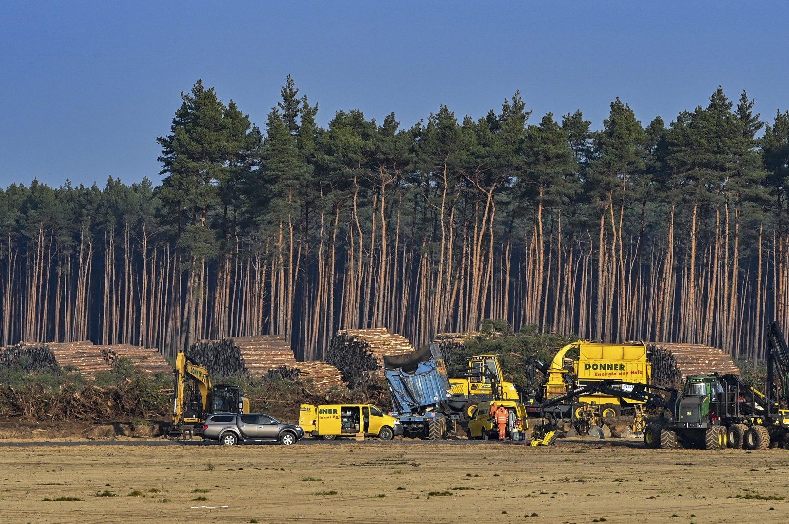 Trees on the construction site of the Tesla Gigafactory in Gruenheide near Berlin, Germany, Dec. 8, 2020. (AP Photo)