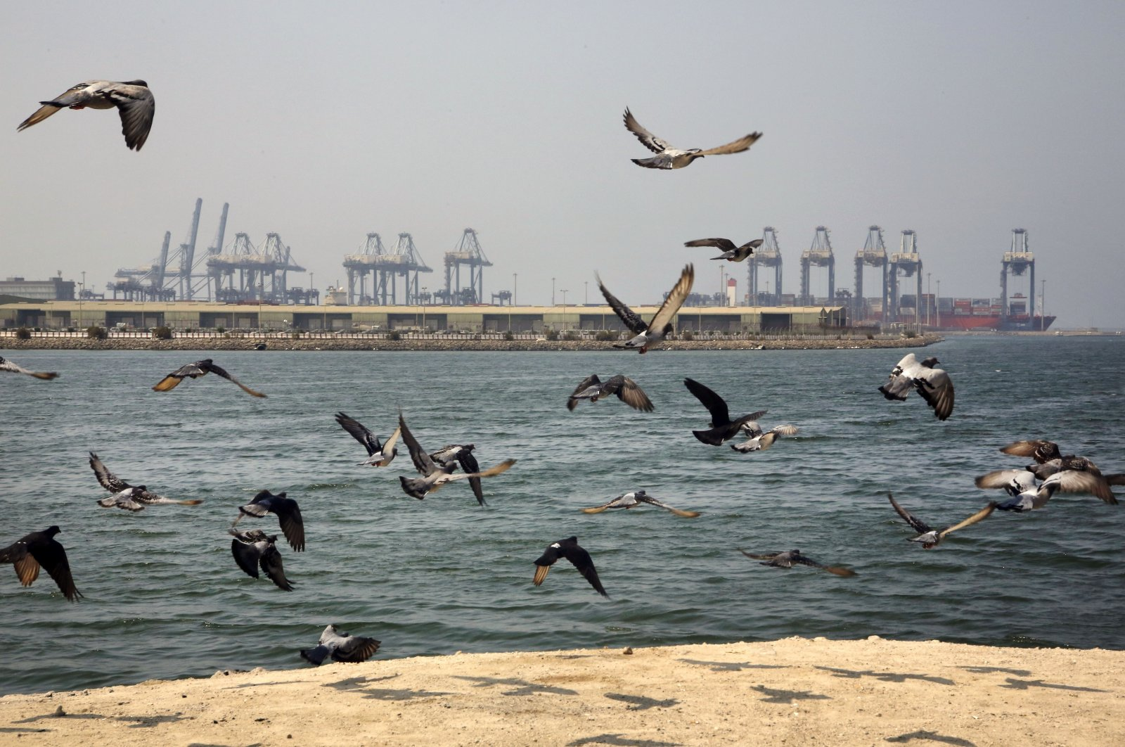 Seagulls fly in front of the Red Sea port city of Jiddah, Saudi Arabia, Oct. 11, 2019. (AP Photo)