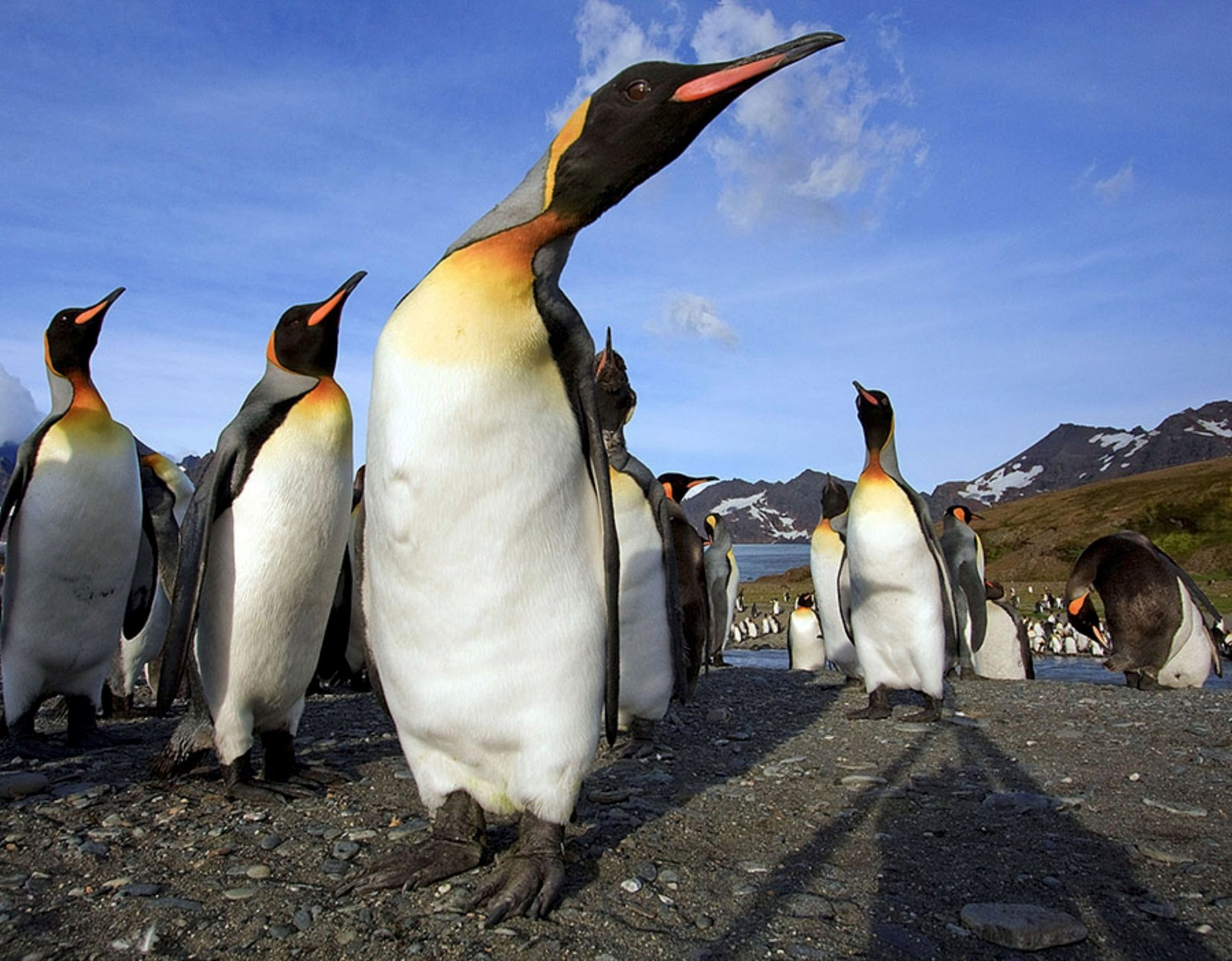 Penguins stand on South Georgia Island in this undated photo. (Photo by Alek Komarnitsky via Reuters)
