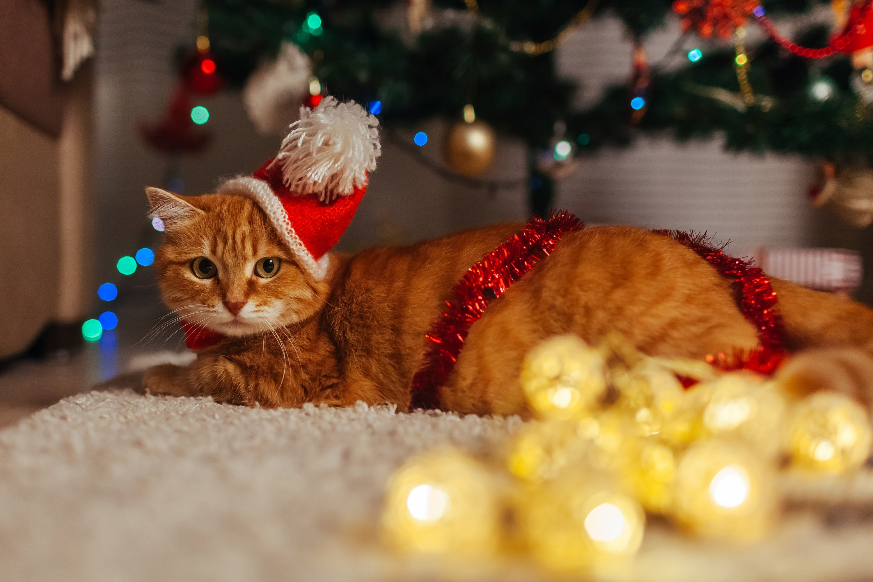 Wearing red on New Year's is said to bring love, luck and good fortune. (Shutterstock Photo)