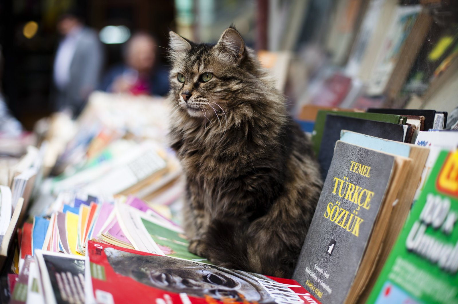 A cat sits on old books at a bookstore stand selling secondhand books in the streets of Galata, Istanbul, Turkey, March 29, 2011. (Getty Images)