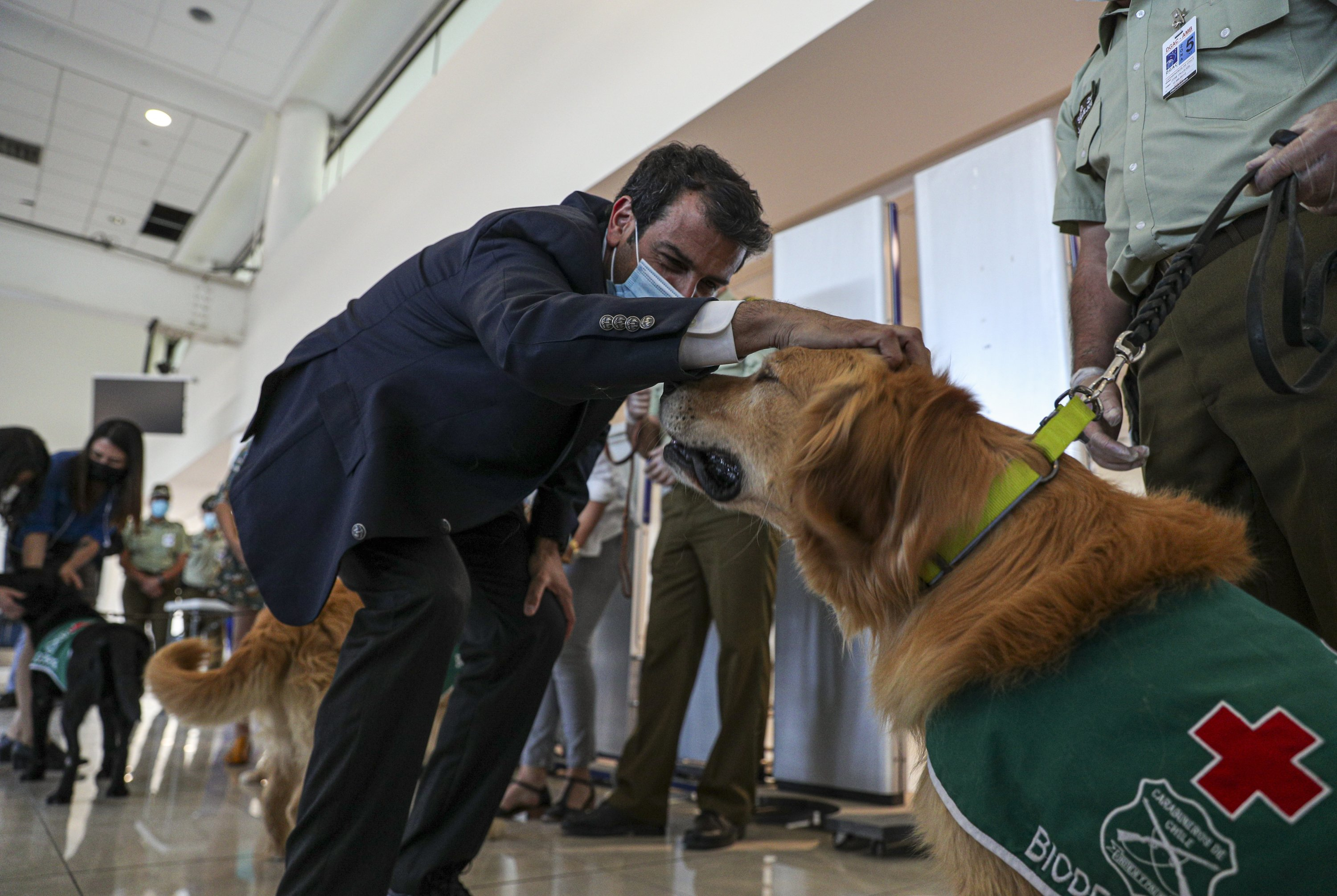 Chilean Interior Minister Rodrigo Delgado, pets a COVID-19 sniffer dog called Clifford after a demonstration to the press at the Arturo Merino Benítez International Airport in Santiago, Chile, Monday, Dec. 21, 2020. Clifford and other coronavirus sniffer dogs will start working Tuesday at the airport. (AP Photo/Esteban Felix)