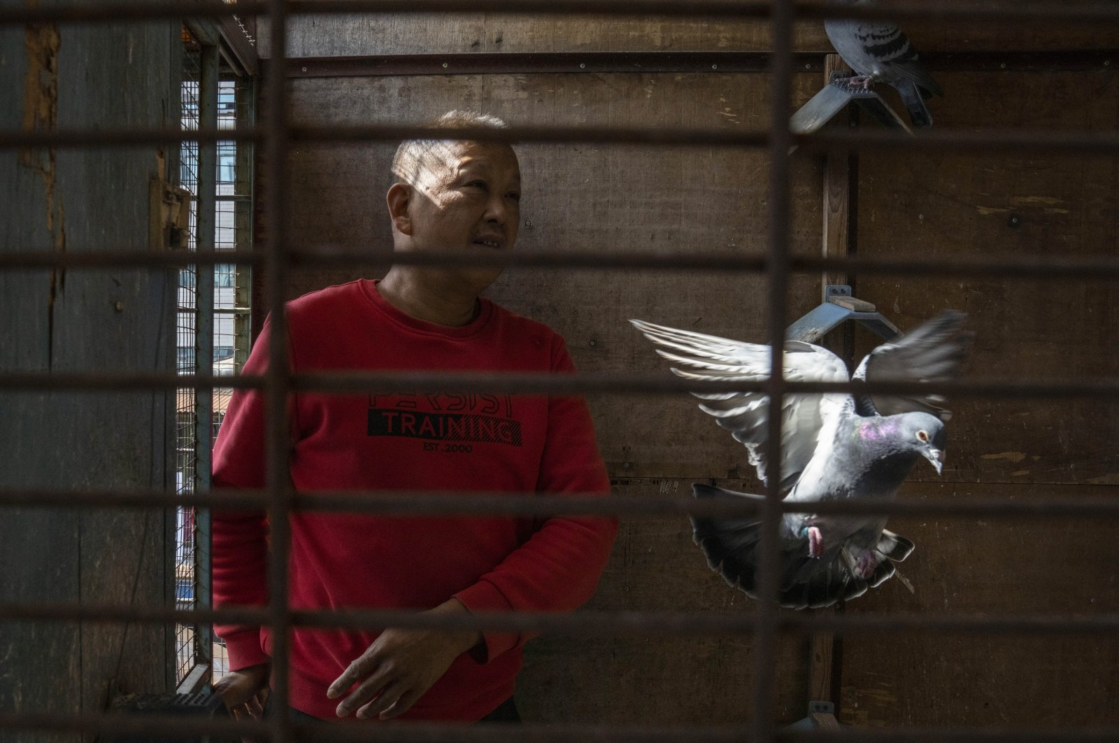 Huanan market vendor Jiang Dafa tends to his pigeons at home in Wuhan in Hubei province, central China, Oct. 22, 2020. (AP Photo)