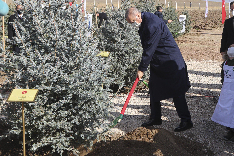 President Recep Tayyip Erdoğan plants a sapling in the capital Ankara, Turkey, Nov. 11, 2020. (DHA Photo)
