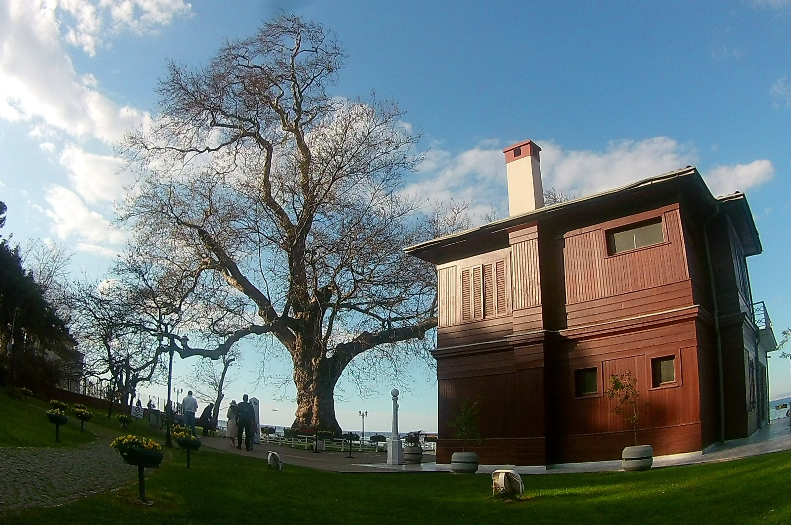 The mansion and the plane tree are seen side by side in Yalova, northwestern Turkey, Jan. 3, 2021. (AA PHOTO)