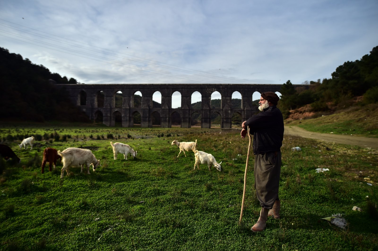 A shepherd tends to his herd as the sheep and goats graze in Alibeyköy Dam's now empty water reservoir, in Istanbul, Turkey, Jan. 8, 2021. (IHA Photo)