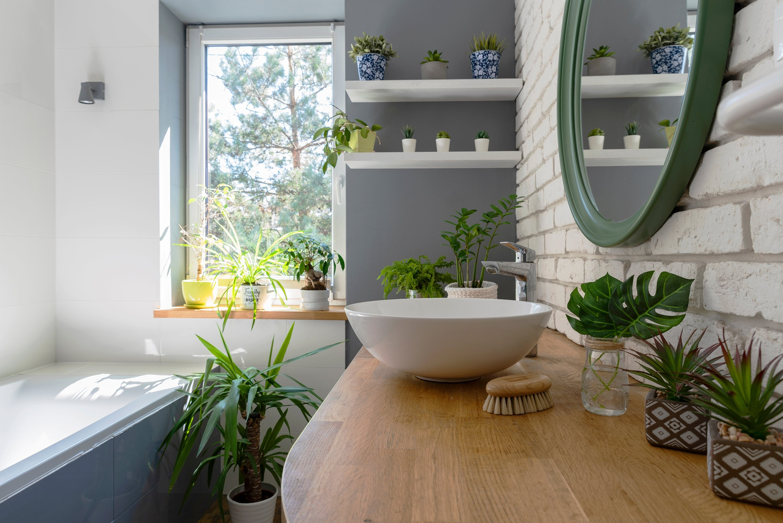 Indoor gardening 20 plants that can thrive in your bathroom ...