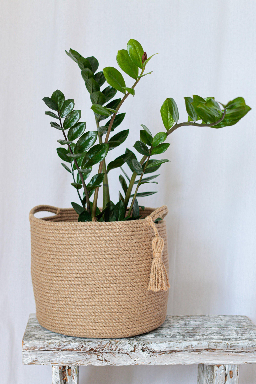 Zamioculcas can thrive in very little light. (Shutterstock Photo)