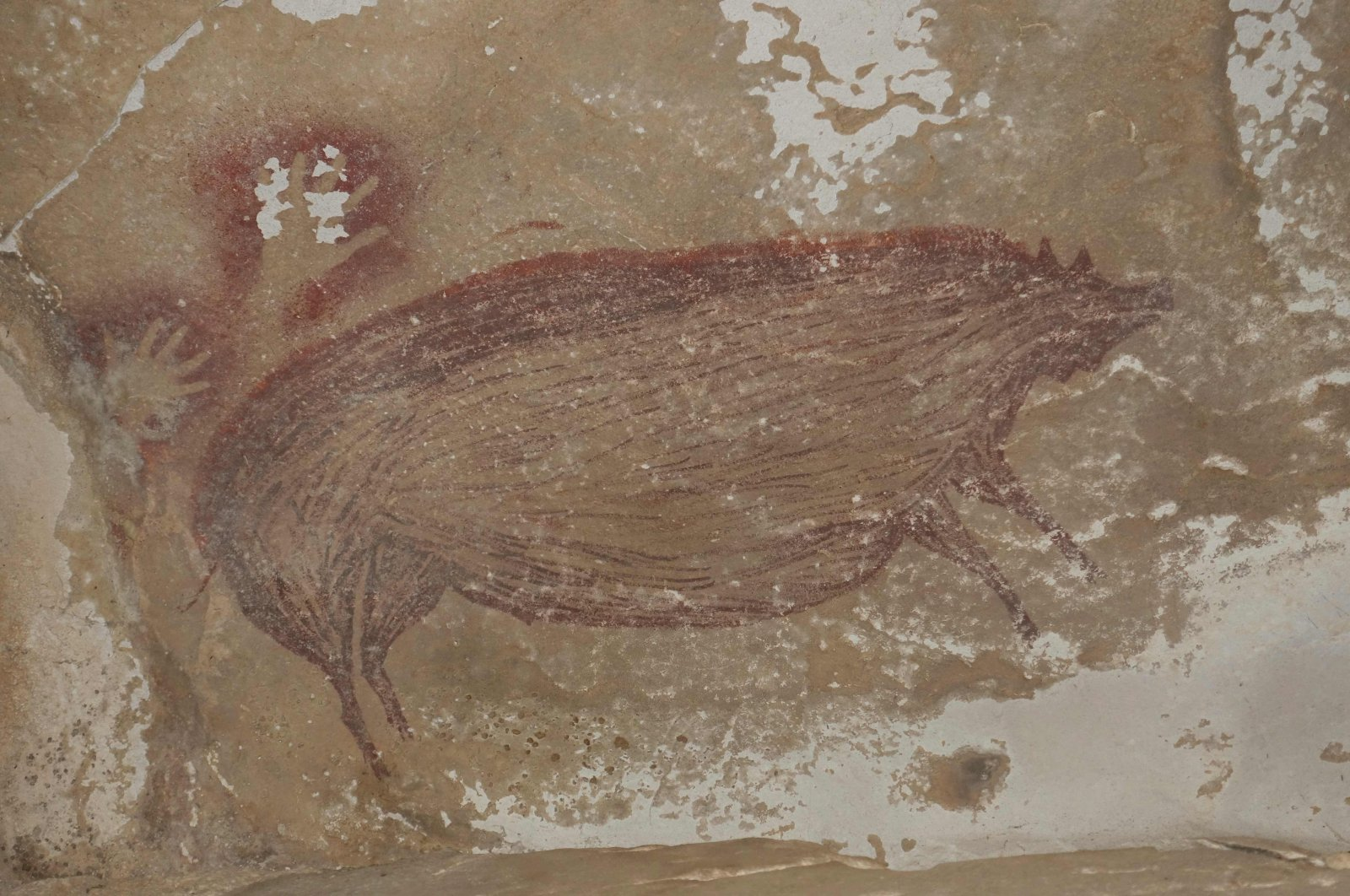 This undated handout photo shows a dated pig painting at Leang Tedongnge in Sulawesi, Indonesia. (AFP Photo)