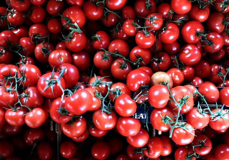 The quota imposed by Russia on Turkish tomato exports was recently raised from 200,000 tons to 250,000 tons. (AA Photo)