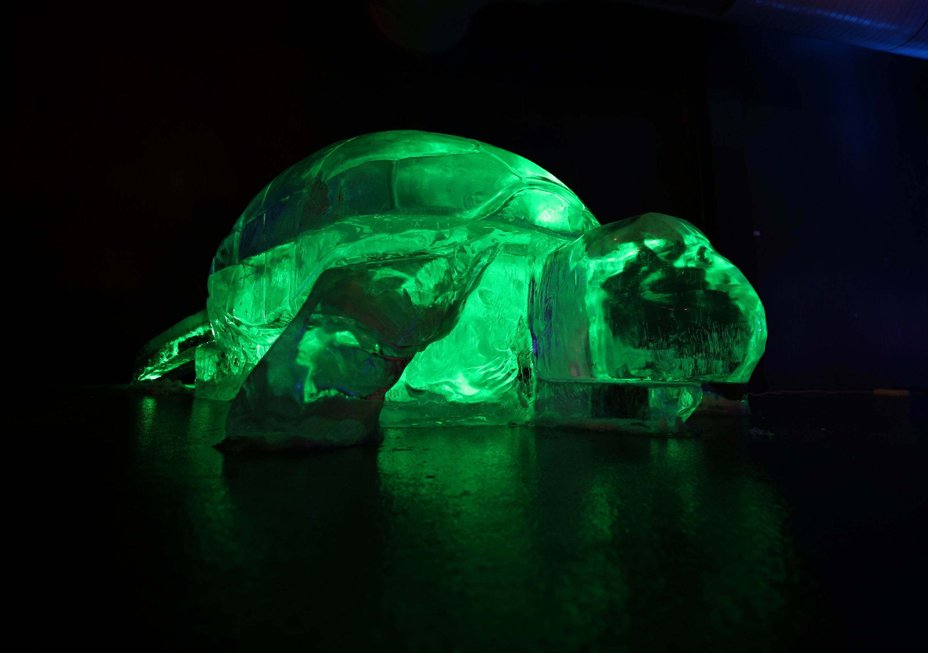 An ice turtle sculpture at the Ata Ince Museum, Erzurum, eastern Turkey, Jan. 20, 2021. (AA Photo)