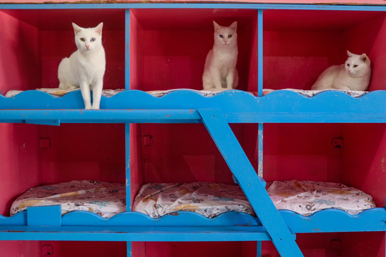 Kucing beristirahat di tempat tidur mereka pada